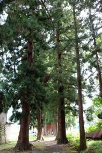 2015.8.31の散歩_2